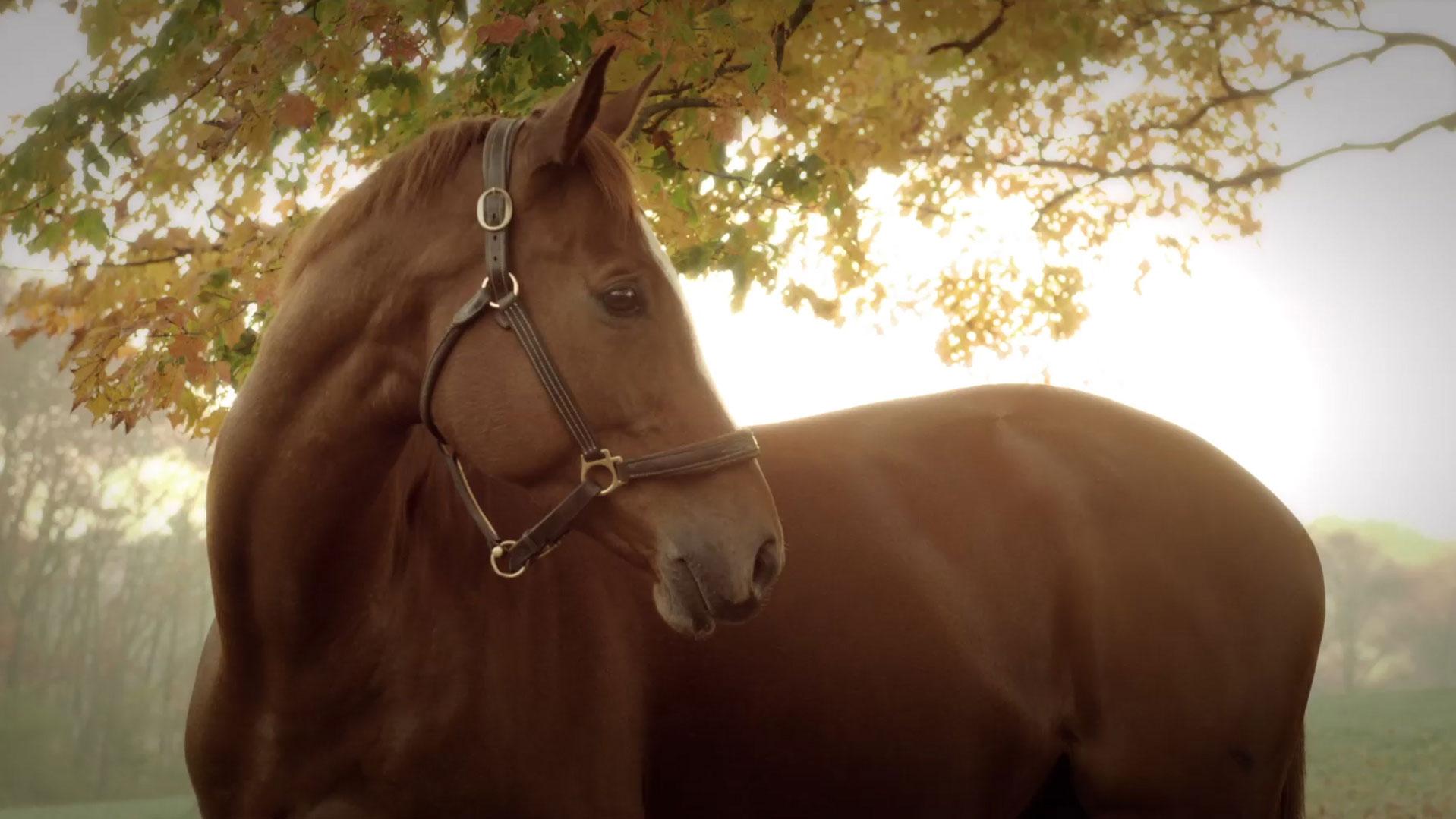 equestrian-bg